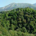 Imponente scarpata boscosa